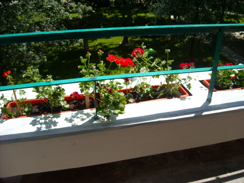 muscate_balcon